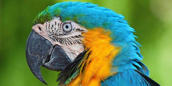 Phancybox website design creating exceptional user experiences beautiful natural design parrot - Web Design